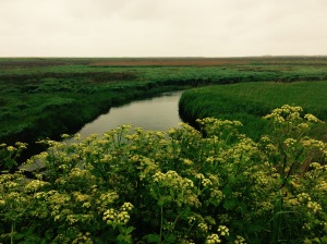 Green colours of the coastal marsh in North Norfolk, representing big sky thinking